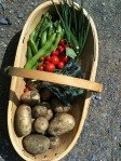 veg from the allotment